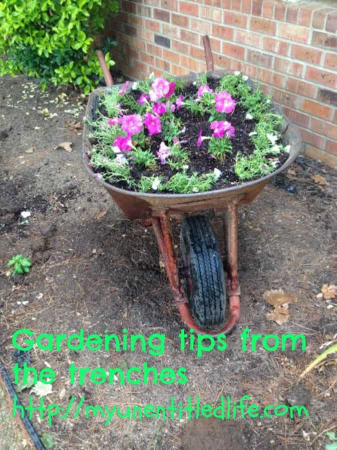 gardening tips from the trenches
