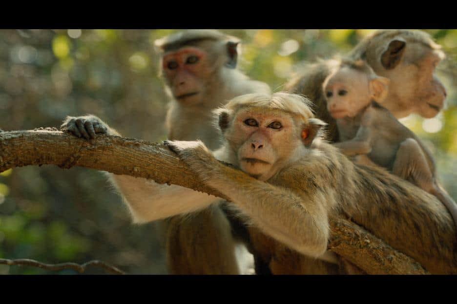 Monkey Kingdom release with trailer