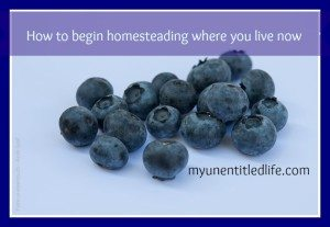 how to begin homesteading where you live now
