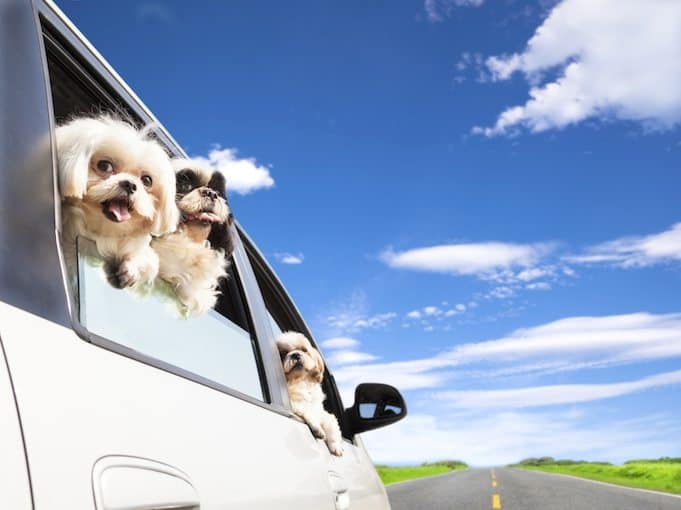 Pets and travelling