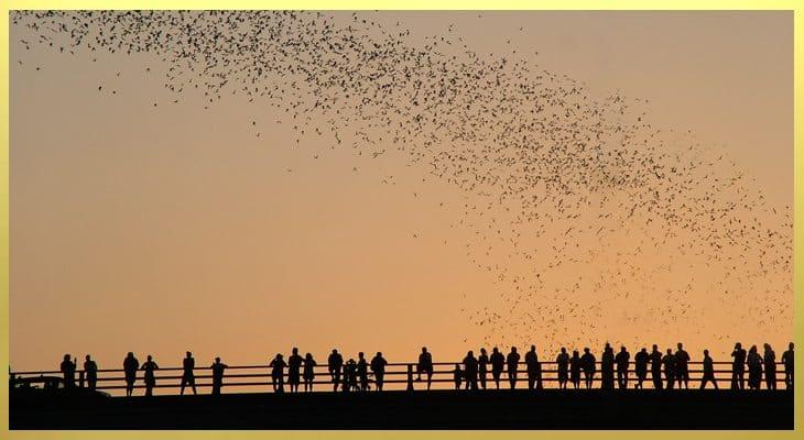 Congress Avenue Bats - My Unentitled Life