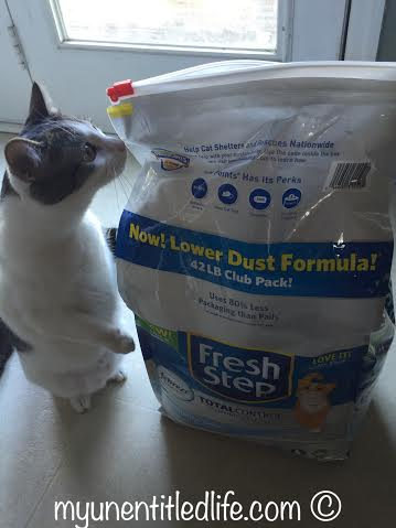 Oreo loves fresh step litter