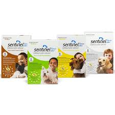 sentinel spectrum protects your dog from fleas and worms