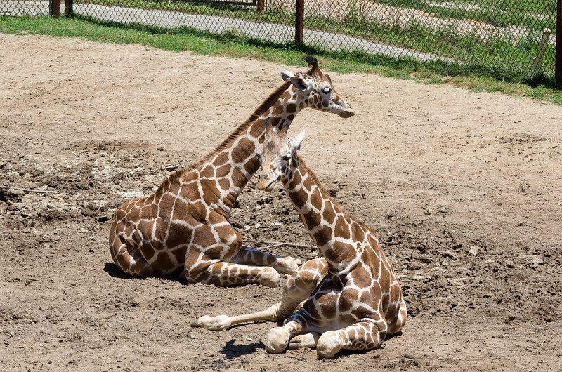 DP Zoo from Springfield CVB