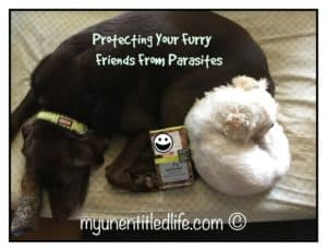 Protecting Your Furry Friends From Parasites #SentinelSpectrum