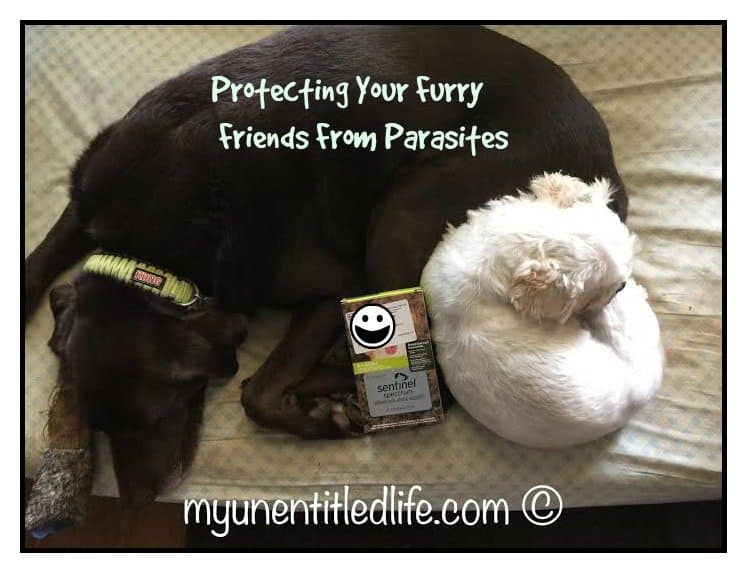 protecting my fur babies from parasites