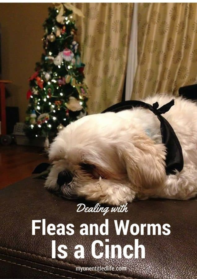 dealing with fleas and worms is a cinch