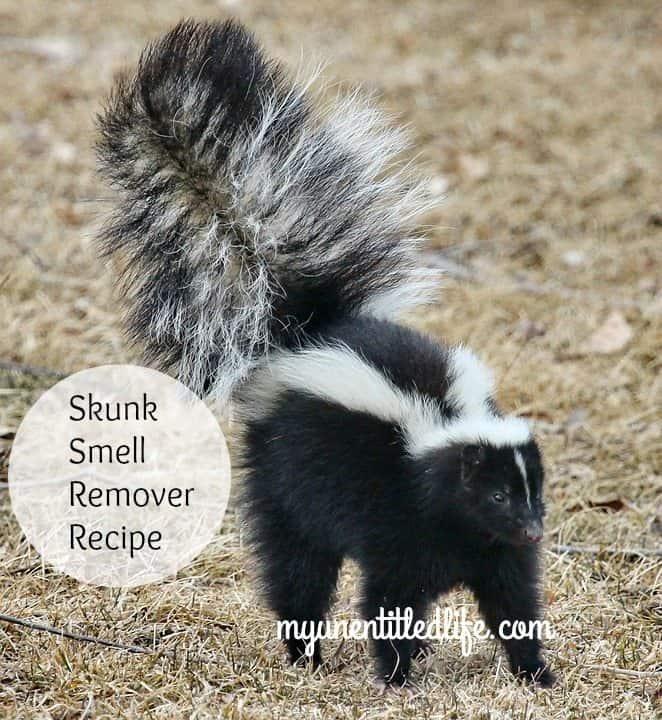 skunk-smell-remover-recipe
